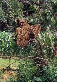 Swarm-in-Tree
