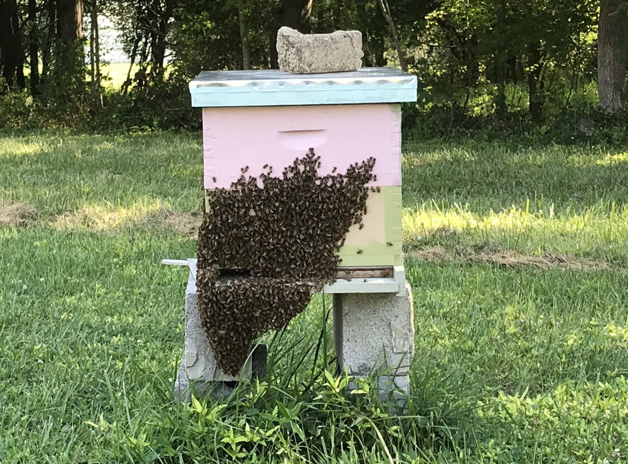 Ashland Beekeepers Association